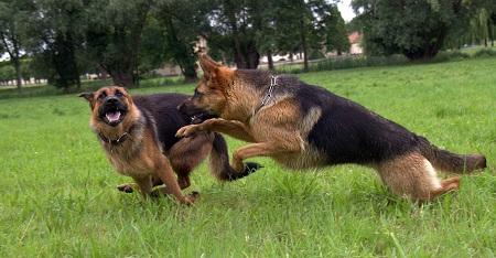 Langage Du Chien - 10 astuces à savoir - Education du chien - En 15 minutes